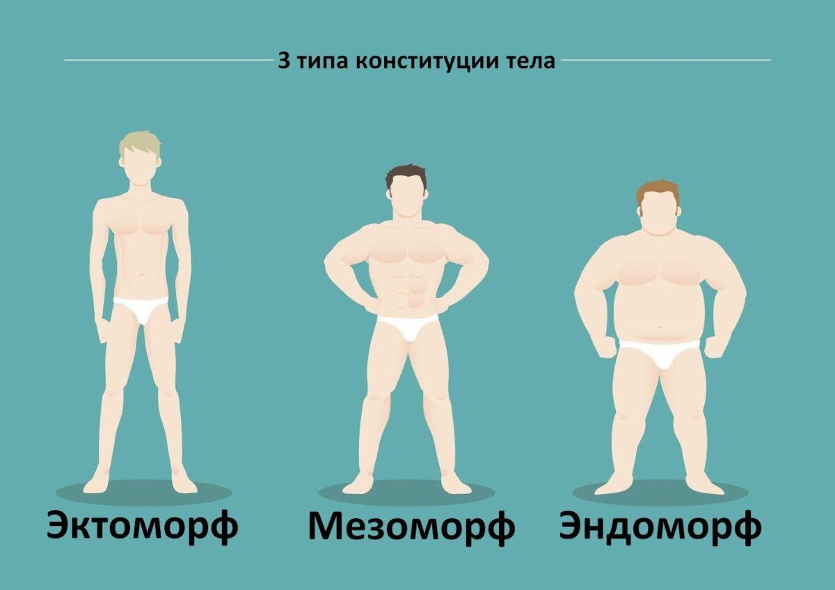 Эндоморф тип